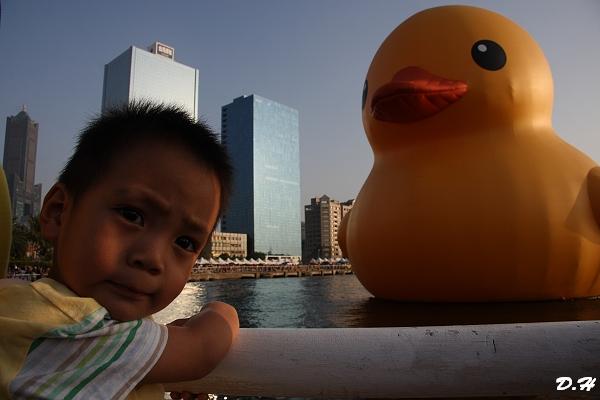 黃色小鴨有什麼好看的