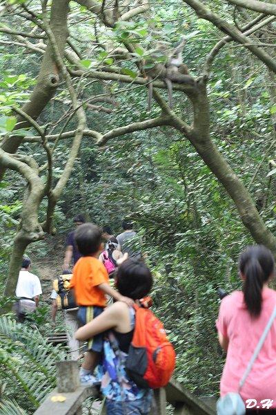 樹上猴子跳-龍門亭往雅座岔路
